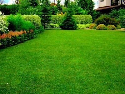 Русский огород - семена овощей, цветов.  В наличии. — Газоны — Семена газонных трав