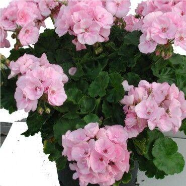 Цветочный дворик 💐