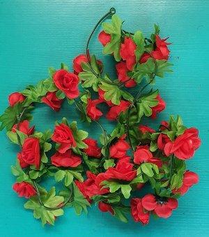 Лиана роза чайная 1,9м бутон 4 см.Цвет красный.