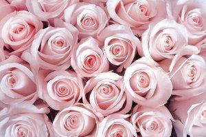 Фотообои Благоухающий букет нежных роз