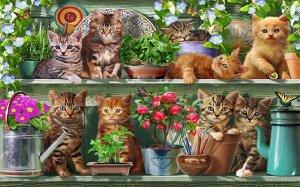 3D Фотообои «Озорные котята»