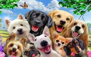 3D Фотообои «Улыбающиеся собачки»