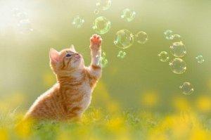 3D Фотообои «Рыжий кот с мыльными пузырями»