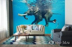3D Фотообои «Купающийся слон»