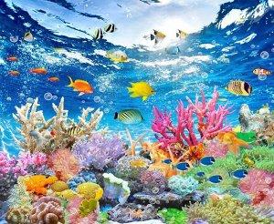 Фотообои Яркие краски кораллового рифа