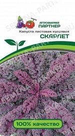 Семена Капуста листовая кудрявая Скарлет 0,3 гр.