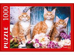 Пазлы 1000 Рыжие котята Мейн-кун