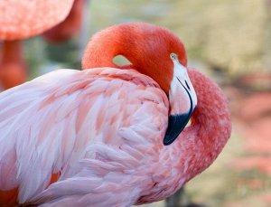 "Раскраска на картоне ""Красивый фламинго"" А4"