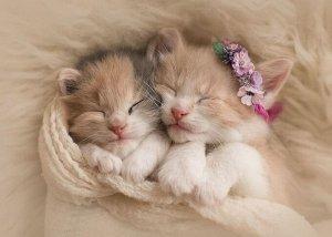 """Раскраска на картоне """"Милые котята"""" А3, в кор."""