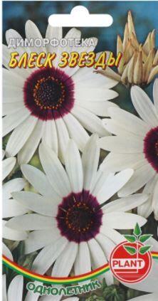 """Семена цветов Диморфотека """"Блеск звезды"""""""