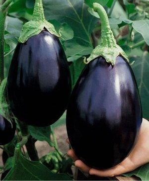 Семена Баклажан «Черный красавец»