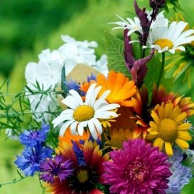 Русский огород - семена овощей, цветов.  В наличии. — Цветы — Семена цветов