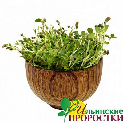 Микрозелень, миксы семян для проращивания! Полезно — Микс семян для проращивания микрозелени