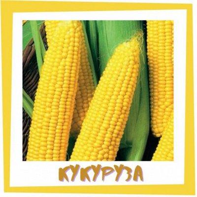 Семена. Большой выбор. — Кукуруза — Семена овощей