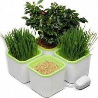 Никольские проростки. Семена для проращивания. Обновление. — Лотки, поддоны и проращиватели  для выращивания микрозелени — Пищевые добавки