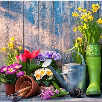 Дачный сезон! НЕ ПРОПУСТИ! Более 2000 видов семян!       — Календарь садовода — Семена овощей