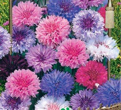 Дачный сезон! НЕ ПРОПУСТИ! Более 2000 видов семян!       — Цветы однолетние. Хиты! — Семена однолетние