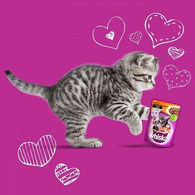 Нашим любимцам: Whiskas, Kitekat, Sheba, Pedigree, Chappi — Корма для котят Whiskas — Корма