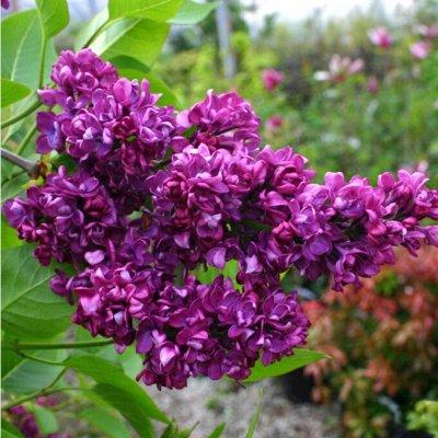 Растения! Выгодные цены! Ограниченное количество! Выбор