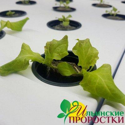 Микрозелень, миксы семян для проращивания! Полезно — Семена для выращивания салатов