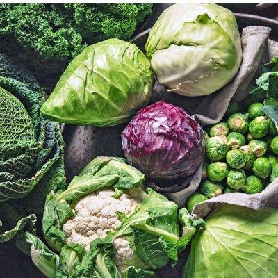 Сад-огород на балконе: семена, почвогрунт, удобрения — Капуста: белокочанная, цветная, брокколи, брюсс. — Семена овощей