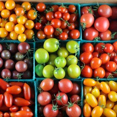 Сад-огород на балконе: семена, почвогрунт, удобрения — Томаты, в т.ч. балконные сорта — Семена овощей