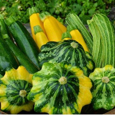Сад-огород на балконе: семена, почвогрунт, удобрения — Кабачки, цуккини, патиссоны. Дыня — Семена овощей