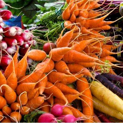 Сад-огород на балконе: семена, почвогрунт, удобрения — Редис. Морковь. Горох. Свекла. — Семена овощей