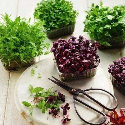 Сад-огород на балконе: семена, почвогрунт, удобрения — Микрозелень: зеленые витамины каждый день! — Семена зелени и пряных трав