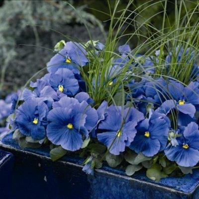 Сад-огород на балконе: семена, почвогрунт, удобрения — Цветы для дома и дачи. Газонные травы — Семена многолетние