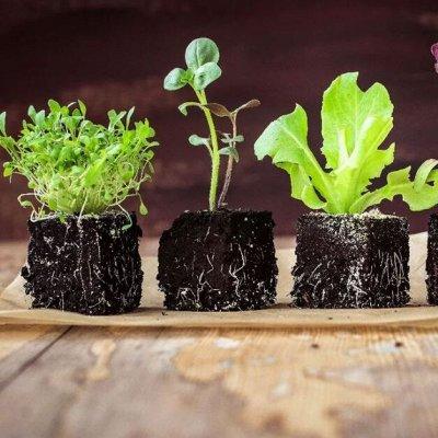 Семена пряностей, цветов, газонных трав — Удобрения. Грунт. Горшки для рассады и т. п