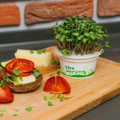 Микрозелень, миксы семян для проращивания! Полезно — Семена для выращивания микрозелени