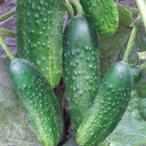 Семена Огурец 0,3 г