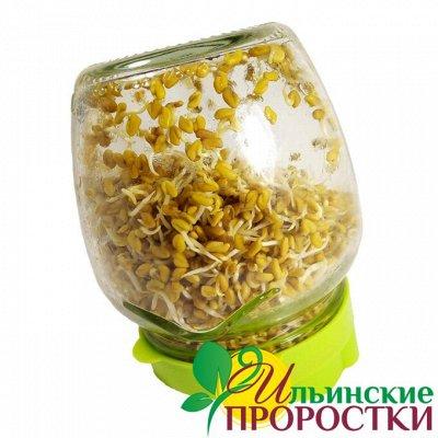 Микрозелень, миксы семян для проращивания! Полезно — Семена для проращивания на росток + ПОДАРОК (Крышка-сито!)