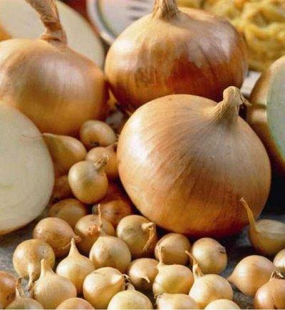 Распродажа луковичных и семян! Количество ограничено! — Лук-севок — Семена овощей