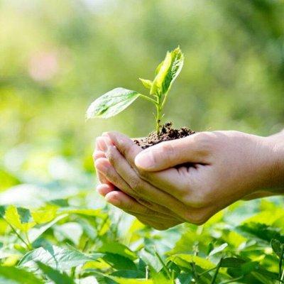 Распродажа луковичных и семян! Количество ограничено! — Стимуляторы роста, защита растений — Семена