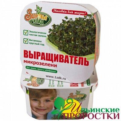 Микрозелень, миксы семян для проращивания! Полезно — Домашние проращиватели, Крышка-сито