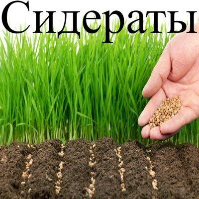 Питательные почвогрунты. Защита и удобрения.  — Сидераты — Стимуляция роста