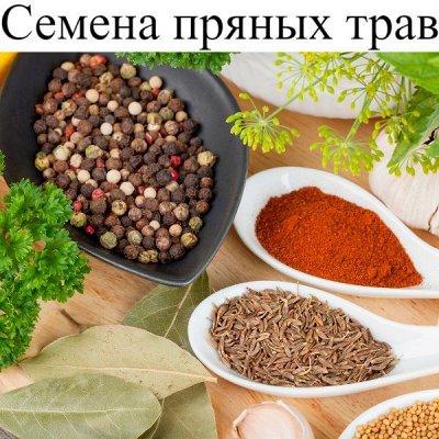 Питательные почвогрунты. Защита и удобрения.  — Семена пряно- ароматических трав — Семена зелени и пряных трав