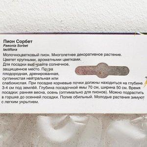 ПИОН СОРБЕТ р-р 2/3 n, 1 шт