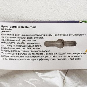 Ирис ГЕРМАНСКИЙ КАНТИНА р-р I, 2 шт