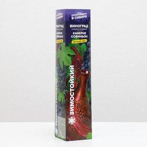 Саженец винограда Каберне Совиньон 1 шт   , Весна 2021