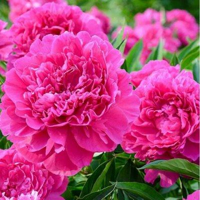 Экспресс! Мудрый дачник! Лук - Севок в наличии!✔ — Новинки цветов! — Семена однолетние