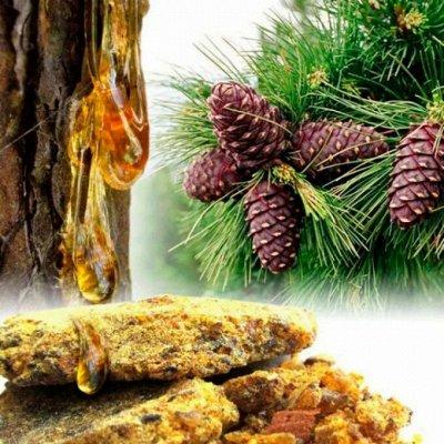 Дермавит - лучшее средство от папиллом. — Живица и эфирные масла из кедра — Витамины и минералы