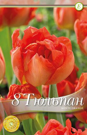 Тюльпан Монте Оранж