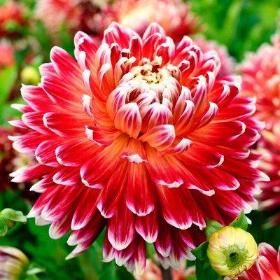 Ликвидация! 💥 Товары для дома — Молниеносная раздача — Распродажа семян и луковиц цветов