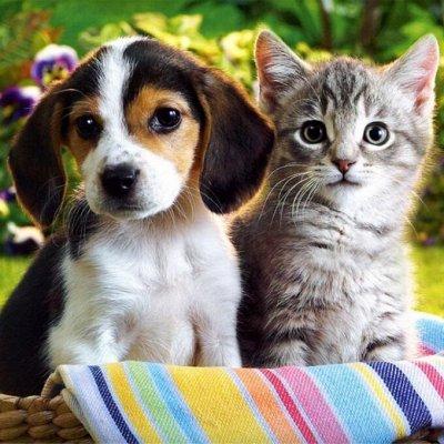 Домашний уют и комфорт💒 Распродажа 3D-ковровых дорожек — Для любимых питомцев — Для животных