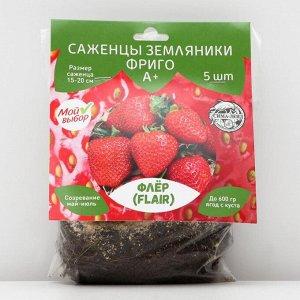 Саженец Земляники ФРИГО Флёр (Flair) A+ (>15 мм), 5 шт