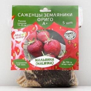 Саженец Земляники ФРИГО Мальвина А+ (15-20 мм), 5 шт