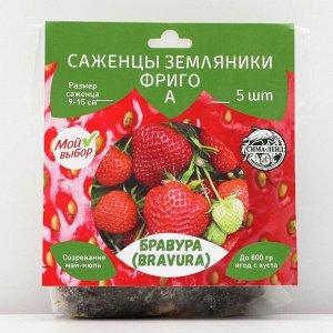 Саженец  Земляники ФРИГО Бравура (Bravura) A (9-15 мм), 5 шт